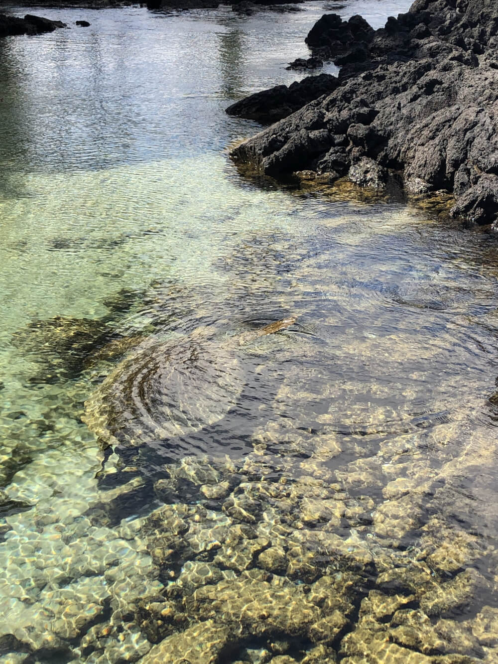 Everything you Need to Know About Traveling to Hawaii Big Island with Kids featured by top Hawaii travel blog, Hawaii Travel with Kids | Carlsmith Beach Park on the Big Island is known for being the best place to see sea turtles in Hawaii!