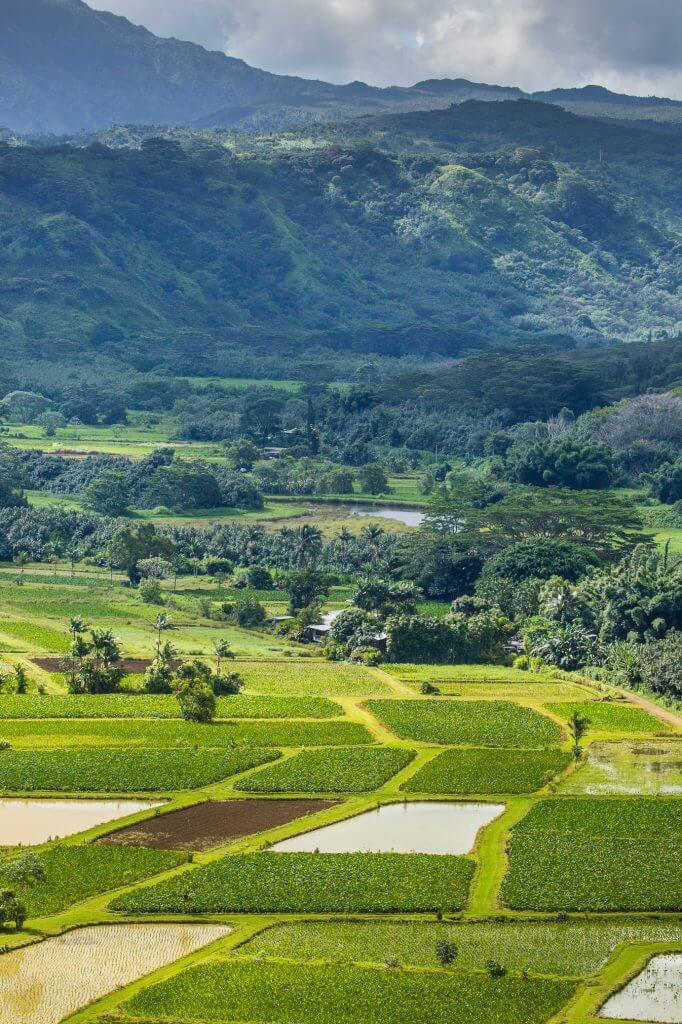 Stop at one of the many free lookouts over Hanalei Valley on the North Shore of Kauai to see taro farms. Image of Hanalei Valley on Kauai.