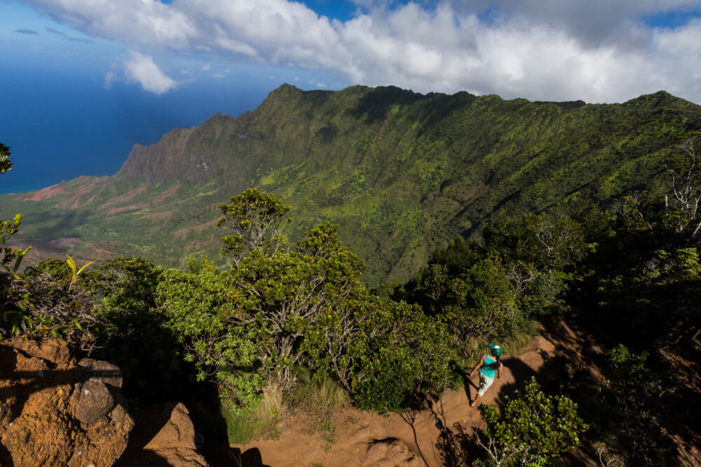 The Ultimate Guide to Birding on Kauai featured by top Hawaii travel blog, Hawaii Travel with Kids: Kokee State Park is a popular place on Kauai for bird watching