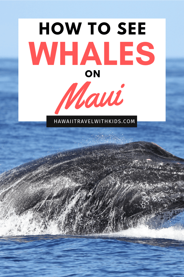 Guide to Whale Watching on Maui featured by top Hawaii blog, Hawaii Travel with Kids | Planning a trip to Maui in Winter? Find out the best places to see whales on Maui in December, January, or February.