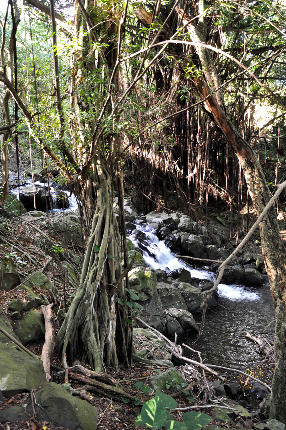 12 Breathtaking Oahu Waterfall Hikes featured by top Hawaii travel blog, Hawaii Travel with Kids | Kapena Falls, Oahu, Hawaii