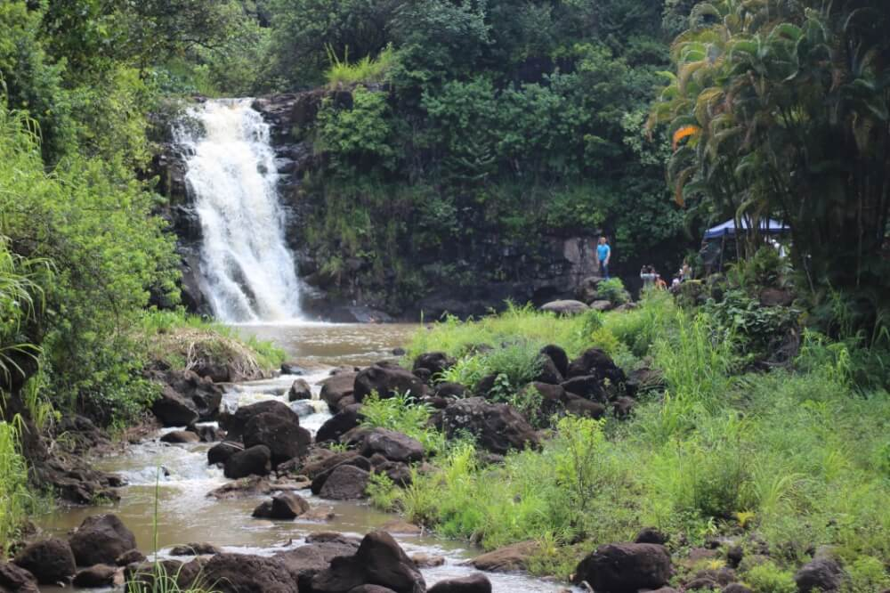 Best things to do in haleiwa oahu, featured by top Hawaii blog, Hawaii Travel with Kids: Waimea Falls is a popular Oahu waterfall