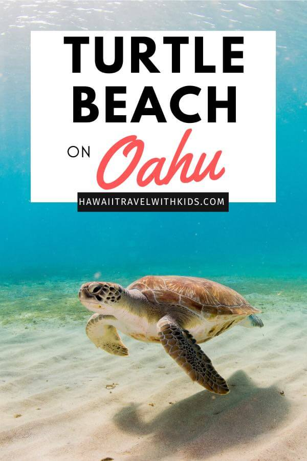Ultimate Guide to Turtle Beach Oahu featured by top Hawaii blog, Hawaii Travel with Kids.