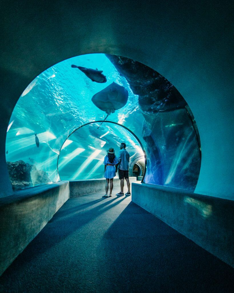 Maui Ocean Center is a popular Maui attraction for families. Image of a couple standing through the immersion tube.