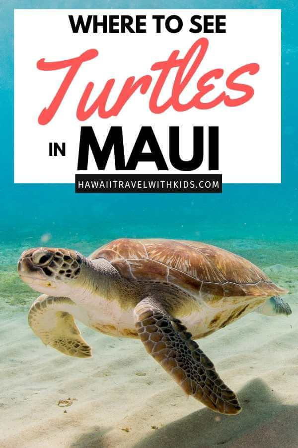 Where to See Turtles in Maui, tips featured by top Hawaii blog, Hawaii Travel with Kids