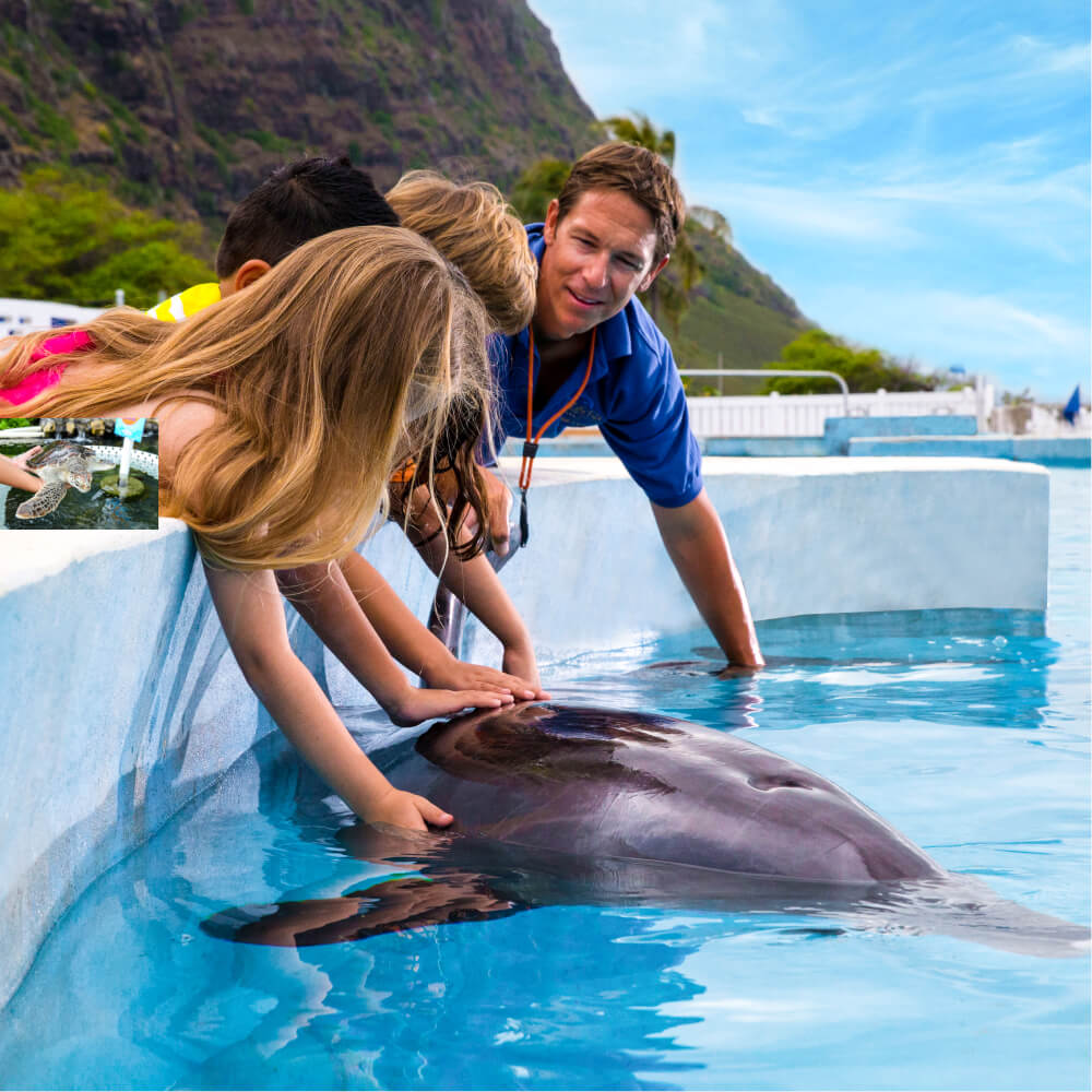 Sea Life Park in Oahu review featured by top Hawaii blog, Hawaii Travel with Kids: Sea Life Park is a top Oahu attraction for kids