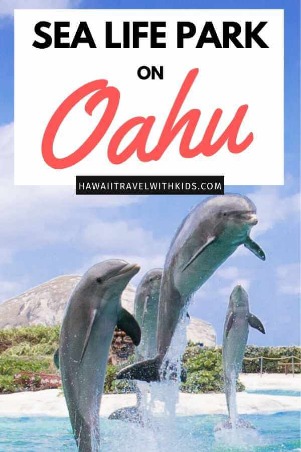 Sea Life Park in Oahu review featured by top Hawaii blog, Hawaii Travel with Kids.