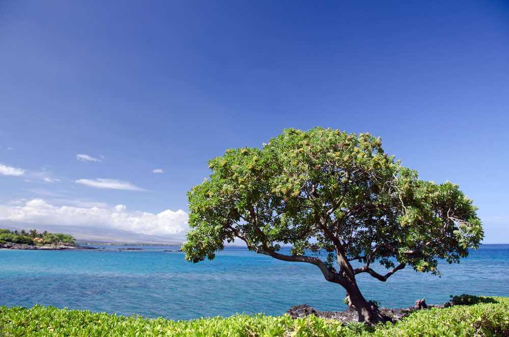 Top 10 Romantic Hawaii Beach Proposal Ideas + Locations featured by top Hawaii blog, Hawaii Travel with Kids: Heliotrope near Kaunaoa beach on the Big Island