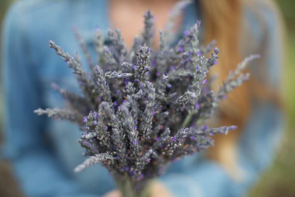 For a cheap activity on Maui, head to the Ali'i Kula Lavender Farm on Maui. Image of a woman holding a bouquet of lavender.