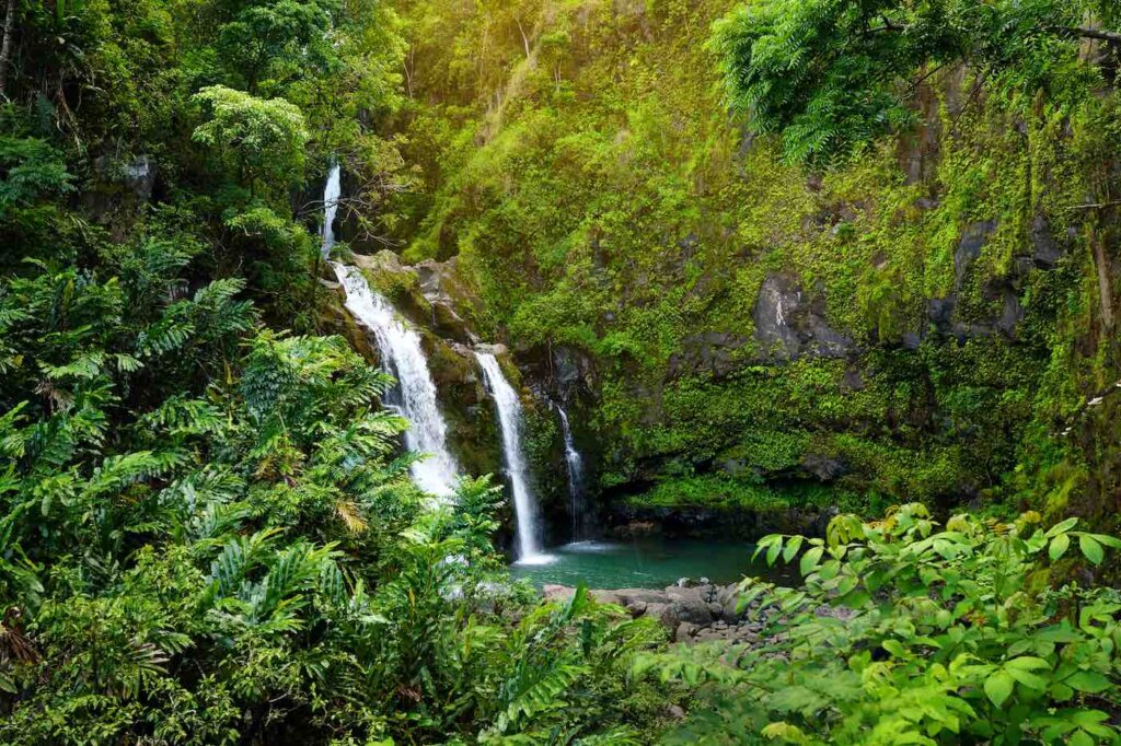 The Upper Waikani Falls is a fun Road to Hana stop for families. Image of three little waterfalls going into a pool of water surrounded by ferns and greenery.