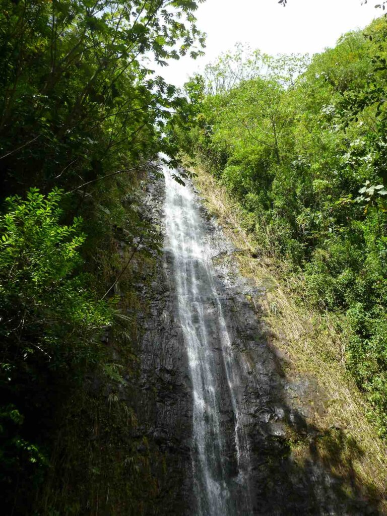 Manoa Falls is a kid friendly hike on Oahu. Image of water runs down Manoa Falls waterfall  surrounded by trees on Oahu, Hawaii.