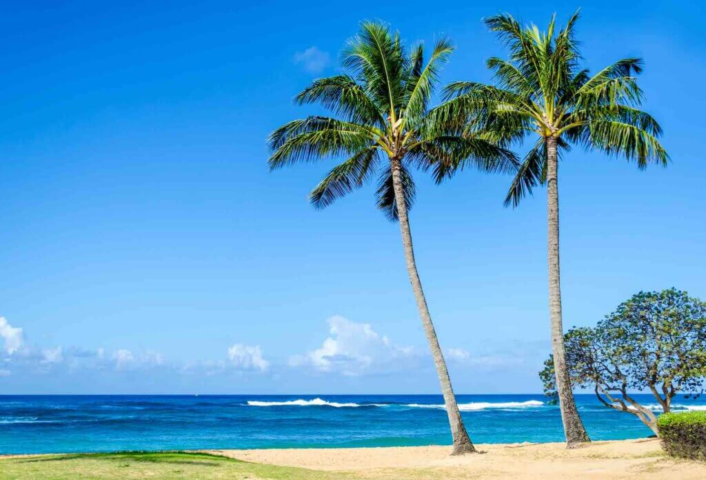 Find out the best Kauai beaches for families recommended by top Hawaii blog Hawaii Travel with Kids. Image of coconut palm trees on sandy Poipu Beach on Kauai.