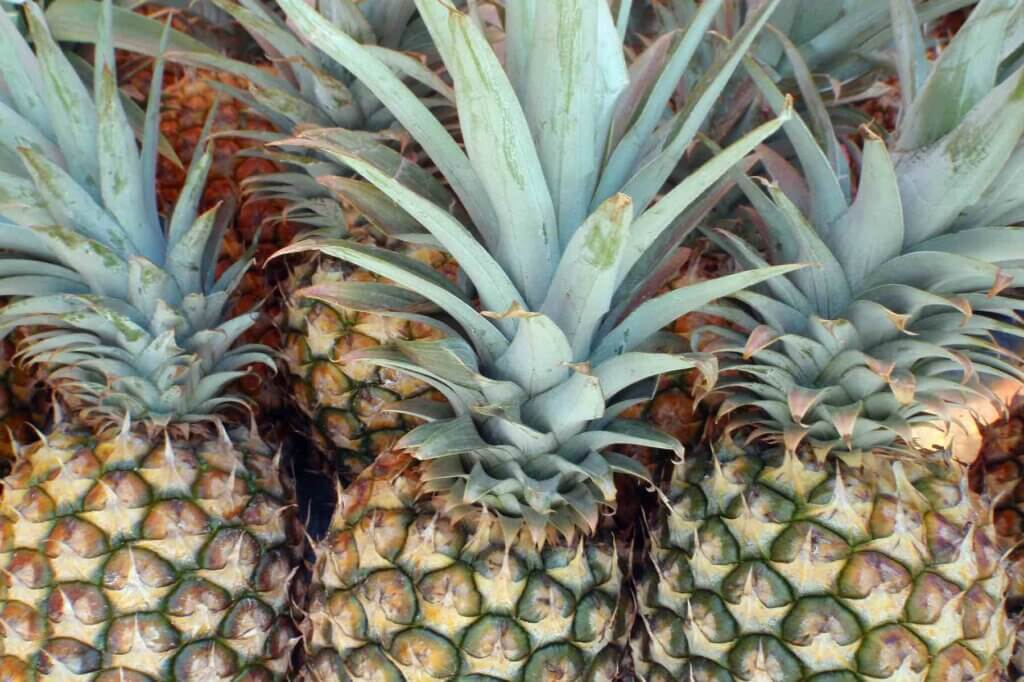 Head to the Kihei Farmers Markets to stock up on fresh Hawaiian fruit like pineapple. Image of a bunch of pineapples in Hawaii.
