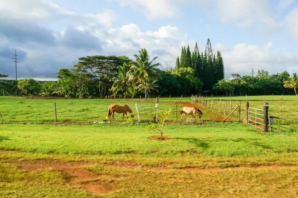 The Kilohana Plantation train ride is a great way to see animals on Kauai. Image of horses at Kilohana Plantation.