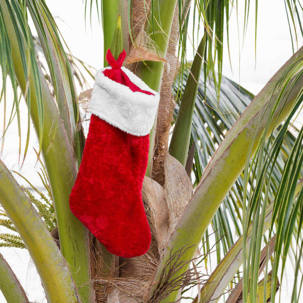 Image of a red stocking hanging in a palm tree in Hawaii.