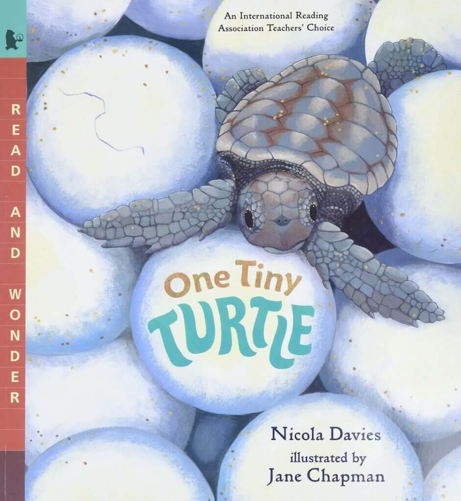 Read the story of a baby sea turtle called One Tiny Turtle.