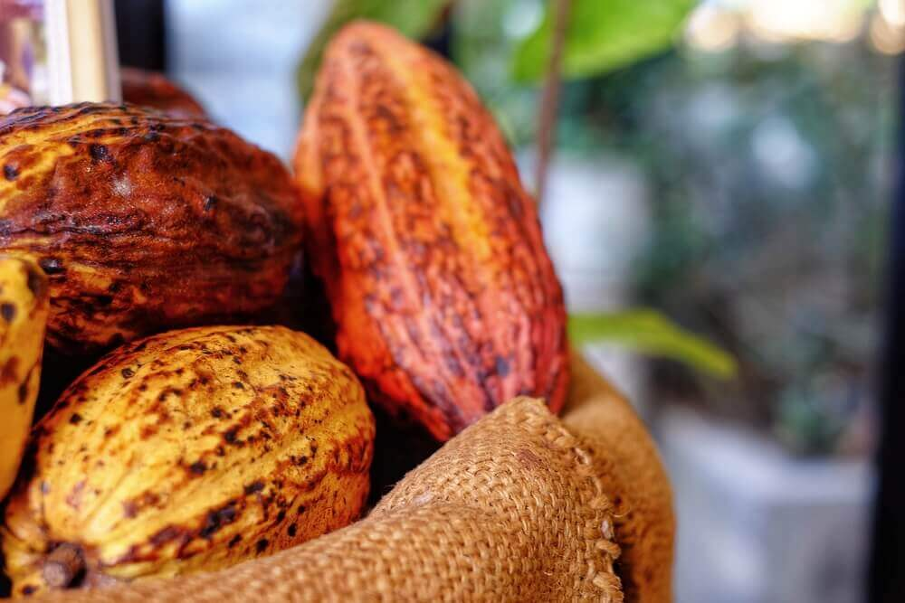 Check out Lydgate Farms, Kauai's best chocolate farm. Image of a pile of ripe cocoa pods in a burlap bag.