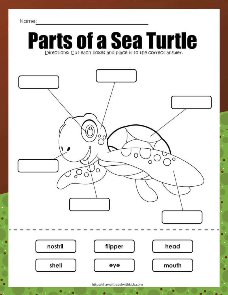 This cut and paste sea turtle activity is a great way to learn about the parts of a sea turtle. Image of a sea turtle worksheet where kids label the parts of a turtle.