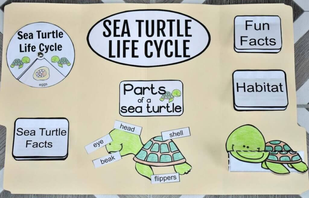 Download instructions to make this sea turtle life cycle lap book by top Hawaii blog Hawaii Travel with Kids. Image of a manilla folder with sea turtle drawings taped to it.