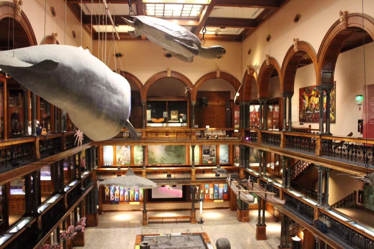 Check out this honest review of the Bishop Museum in Hawaii by top Hawaii blog Hawaii Travel with Kids. Image of the interior of the museum with hanging sea life and museum corridors.