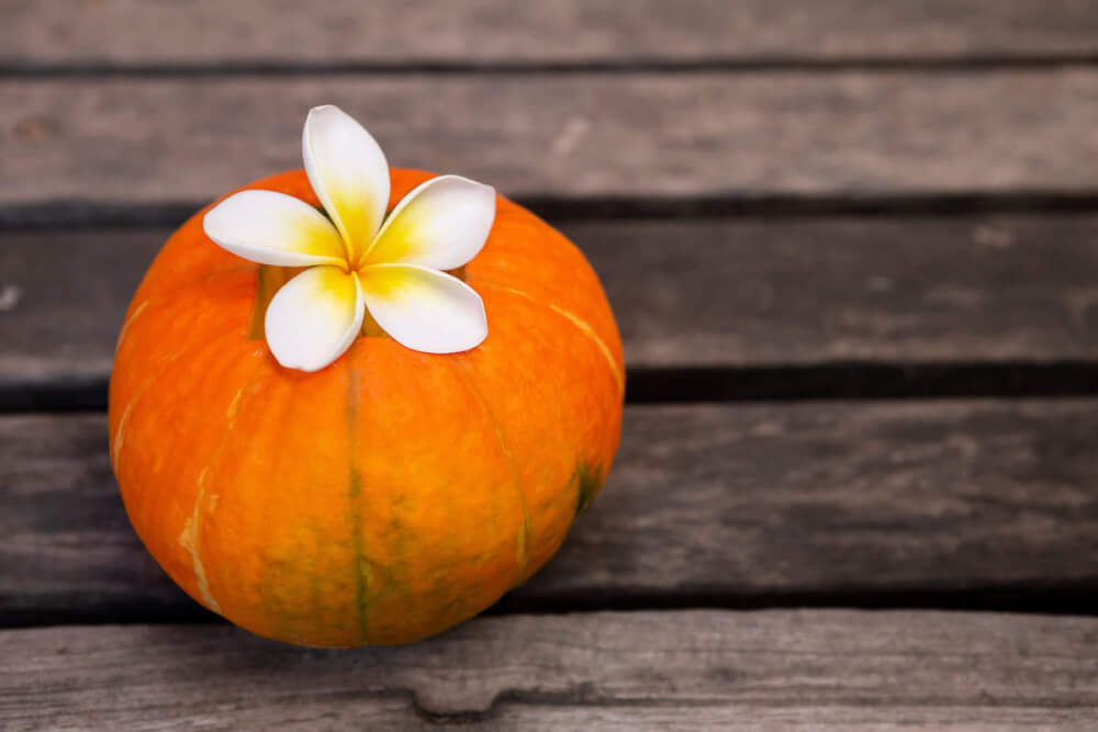 Find out why you should visit Hawaii in October by top Hawaii blog Hawaii Travel with Kids. Image of a pumpkin and plumeria flower.
