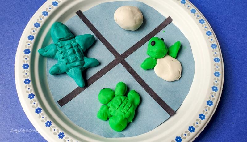 Learn more about the sea turtle life cycle with this fun ocean craft for children.