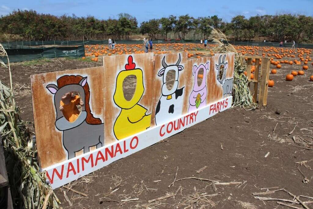 Find out the best pumpkin patches on Oahu recommended by top Hawaii blog Hawaii Travel with Kids. Image of a cute photo op at Waimanalo Country Farms on Oahu.