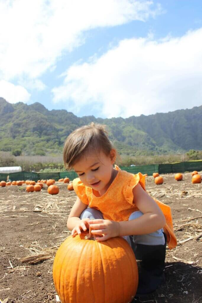 Find out the best pumpkin patches on Oahu recommended by top Hawaii blog Hawaii Travel with Kids. Image of girl with a pumpkin at an Oahu pumpkin patch.